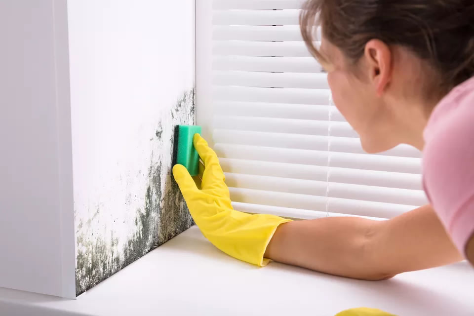 How to Get Rid of Mould from Surfaces in Your Home